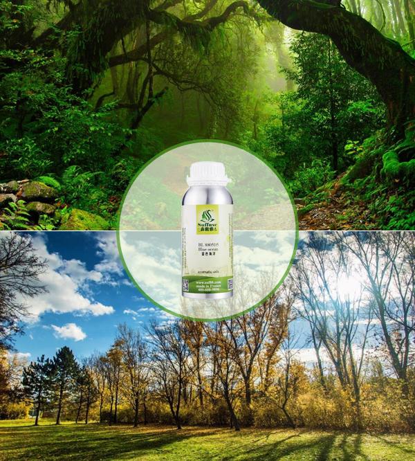 森林类精油